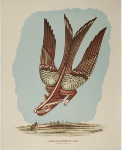 American Badger Swallow (1)